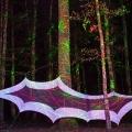 forestation_23