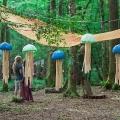 forestation_37