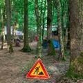 forestation_45
